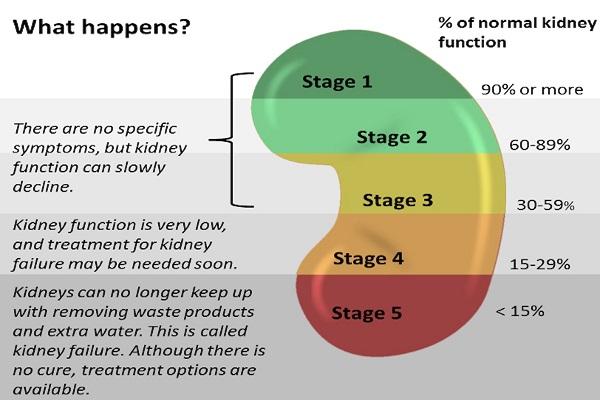 Gfr A Key To Understanding How Well Your Kidneys Are Working